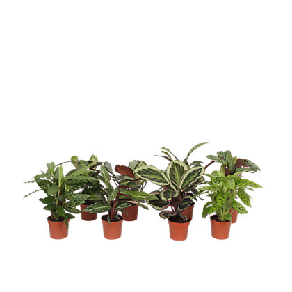 dark red indoor plant pot 28cm. Black Bedroom Furniture Sets. Home Design Ideas