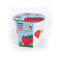 Children's Strawberry Seeds Growing Kit