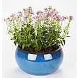 Boscastle Blue Glazed Plant Pot - 38cm