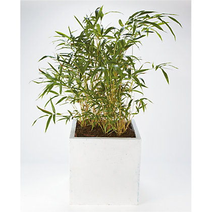 Image for White Clay Cube Plant Pot - 40cm from StoreName