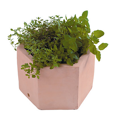 Image for Hexagonal Terracotta Herb Pot - 25cm from StoreName