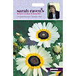 Sarah Ravens - Chrysanthemum Eastern Star
