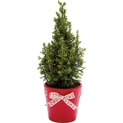 Image for Mini Christmas tree in Ceramic Pot - Available in 3 Colours from StoreName