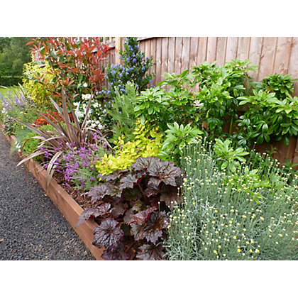 Sunny border collection 4m x 60cm for Garden trees homebase