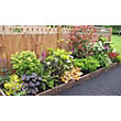 Garden on a Roll - Mixed Border Kit - Shade - 3m x 60cm