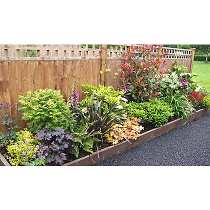Shady border collection 4m x 60cm for Low maintenance border shrubs