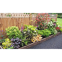Shady Border Collection - 5m x 90cm