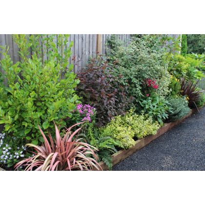 Evergreen border collection 3m x 90cm for Low maintenance evergreen shrubs