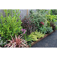 Evergreen Border Collection - 4m x 90cm