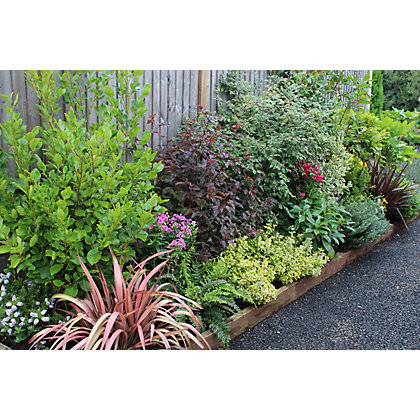 Image for Evergreen Border Collection - 8m x 90cm from StoreName