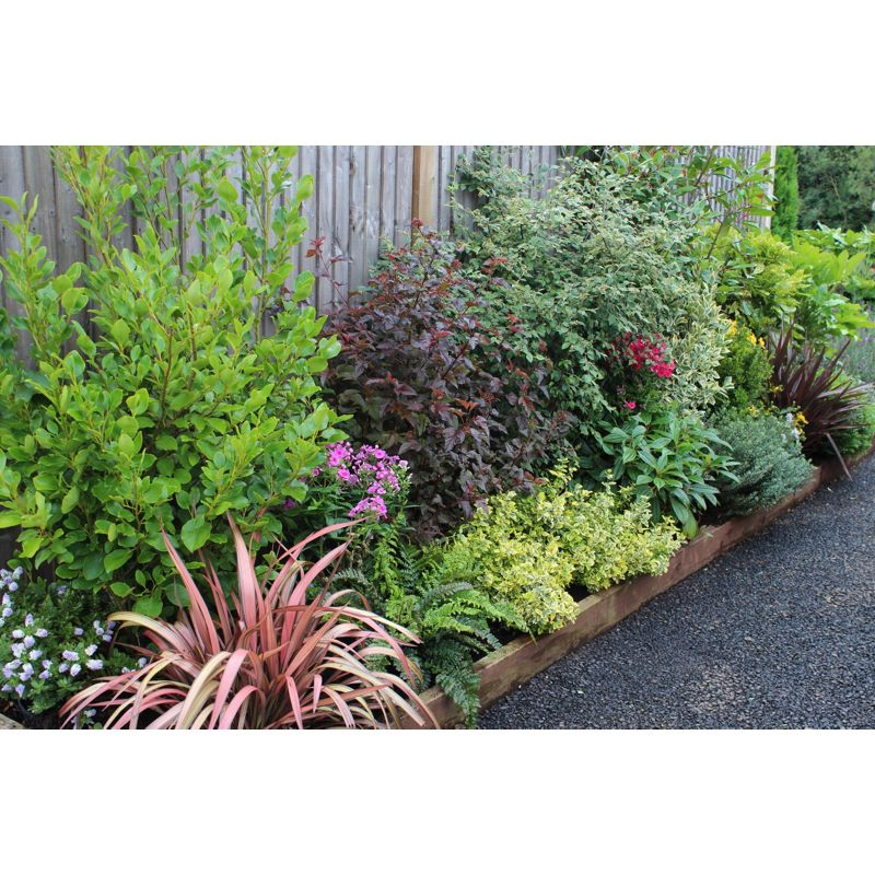Placing top 50 chart for Low maintenance border shrubs