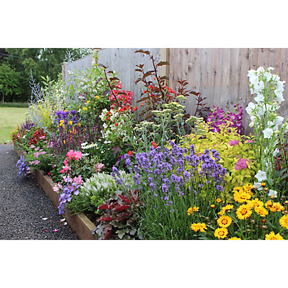 Image for Bee and Butterfly Border Collection - 7m x 60cm from StoreName