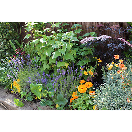 Shady border collection 3m x 60cm for Garden trees homebase