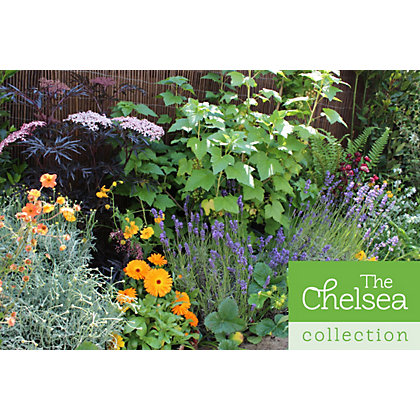 Garden on a roll chelsea border 4m x 60cm for Garden trees homebase