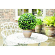 Topiary Leaf Effect Ball - 15cm