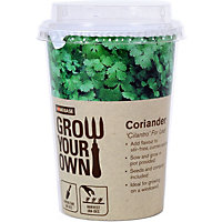 Grow Your Own Herb Pot - Coriander
