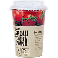 Grow Your Own Veg Pot - Tomato