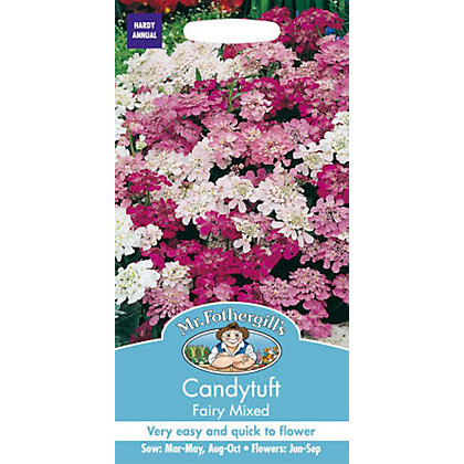 Image for Candytuft Fairy Mixed (Iberis Umbellata) Seeds from StoreName