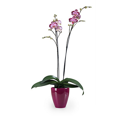 Image for Pure Violet Indoor Plant Pot - 14cm from StoreName