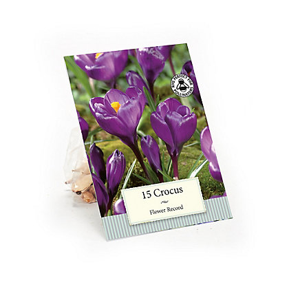 Image for Purple Crocus Flower Record from StoreName