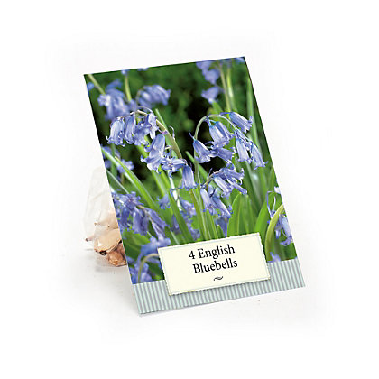 Image for Scilla True English Bluebells from StoreName