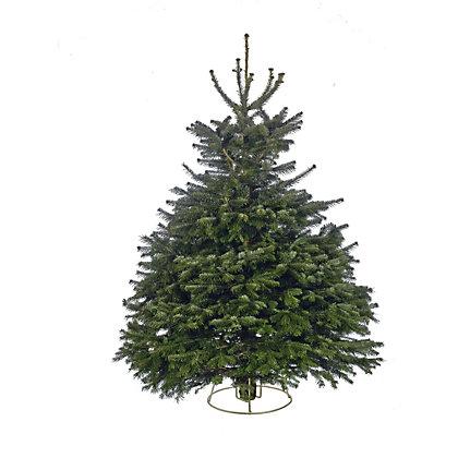 Image for Cut Needlelast Nordman Fir Christmas Tree 6-7ft from StoreName