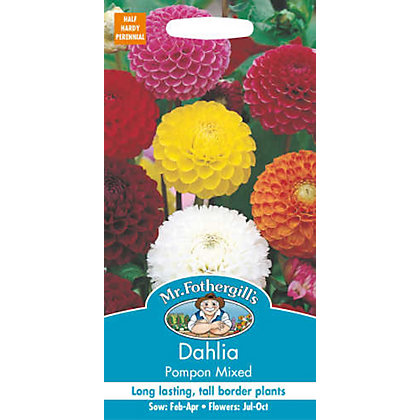 Image for Dahlia Pompon Mixed (Dahlia X Hortensis) Seeds from StoreName
