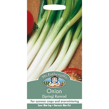 Image for Spring Onion Ramrod (Allium Cepa) Bulbs from StoreName