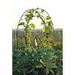 Tildenet London Eye Plant Growing Frame