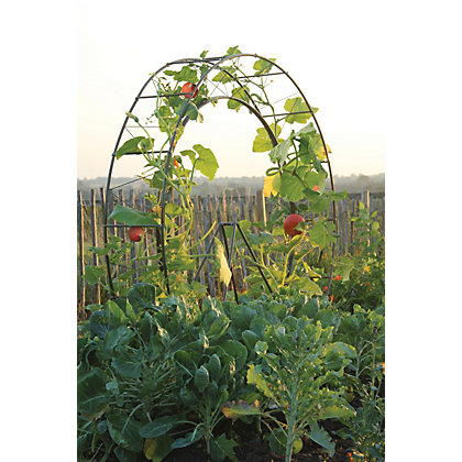Image for Tildenet London Eye Plant Growing Frame from StoreName