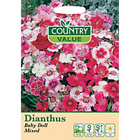 Dianthus Baby Doll Mixed Seeds
