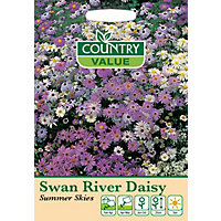 Swan River Daisy Summer Skies Seeds