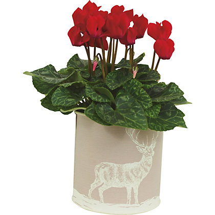 Image for Cyclamen in Stag Printed Zinc Pot from StoreName