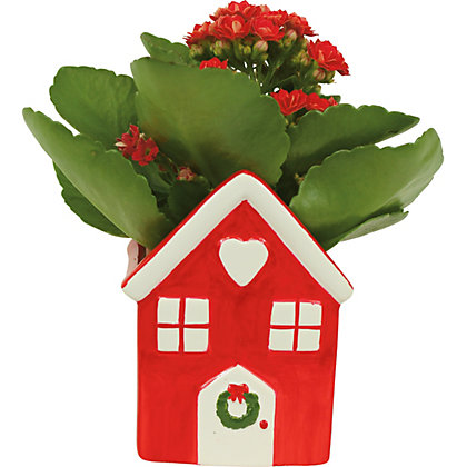 Image for Kalanchoe in Mini Ceramic House from StoreName