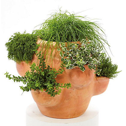 Image for Terracotta Strawberry And Herb Planter from StoreName