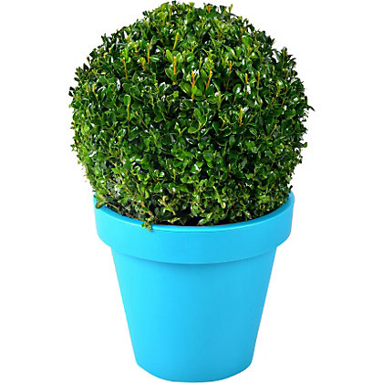 Image for Buxus Ball Evergreen Shrub in Coloured Pot from StoreName