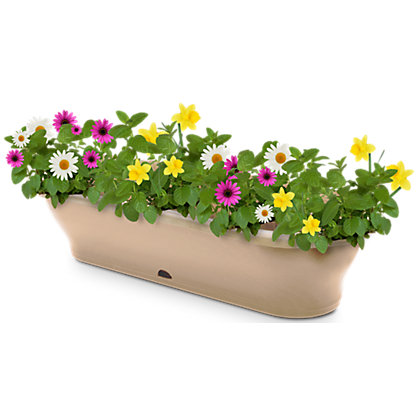 Image for Garden Up Maxx Garden Wall Pot in Latte - 17cm from StoreName