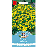 Tagetes Lemon Gem Seeds
