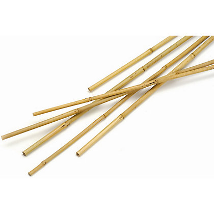 Image for Apollo Bamboo Canes - 2.4m from StoreName