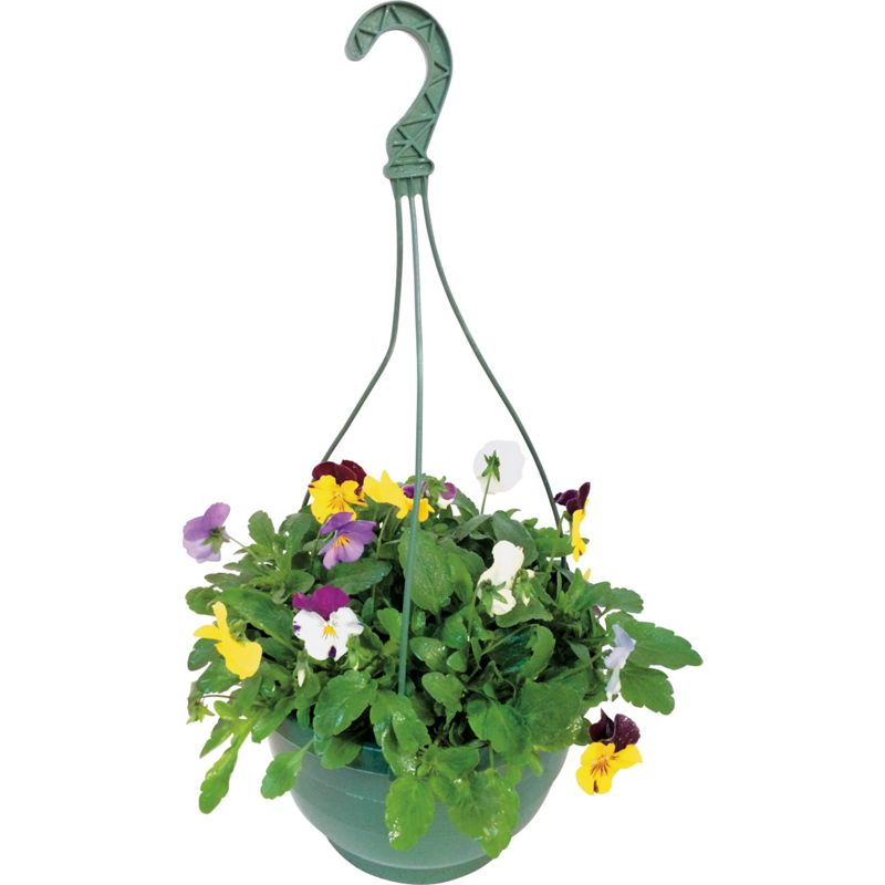 Flower Baskets Homebase : Pansy mixed hanging basket