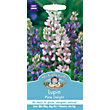 Lupin Pixie Delight (Lupinus Nanus) Seeds