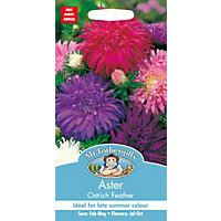 Aster Ostrich Feather Seeds