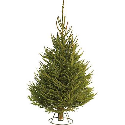 Image for Cut Norway Spruce Christmas Tree 6ft - 7ft from StoreName