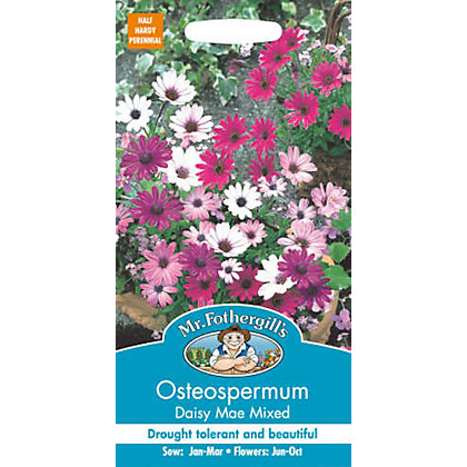 Image for Osteospermum Daisy-Mae Mixed (Osteospermum Ecklonis) from StoreName