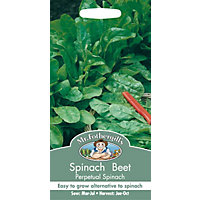 Spinach Beet Perpetual Spinach (Beta Vulgaris) Seeds