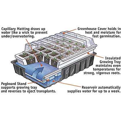 Image for Self Watering Propagator from StoreName