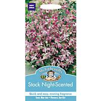 Night Scented Stock (Matthiola Longipetala) Seeds