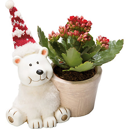 Image for Kalanchoe in Christmas Character Pot from StoreName