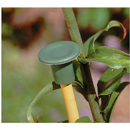 Image for Garden Cane Caps - 6 Pack from StoreName