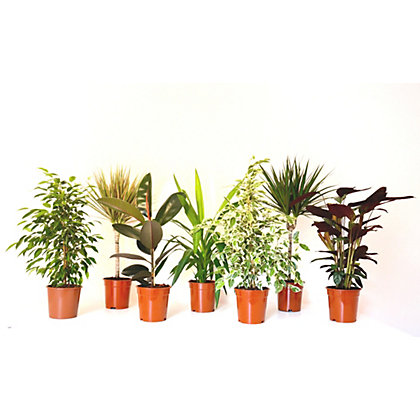 Image for Foliage Plant Mix - 17cm from StoreName